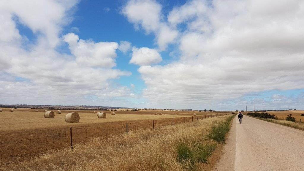 Lavender Cycling Trail (M2C) - Eudunda to Truro - Dutton Mail Run in Spring