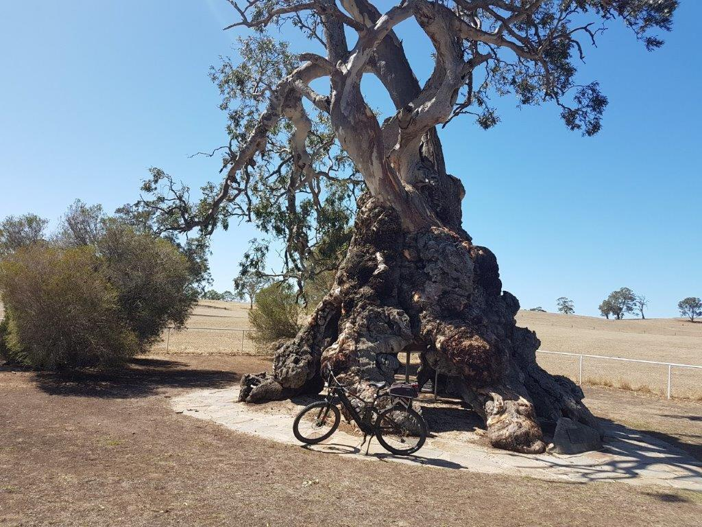 Lavender Cycling Trail (M2C) - Eden Valley to Mount Pleasant - Herbig Family Tree