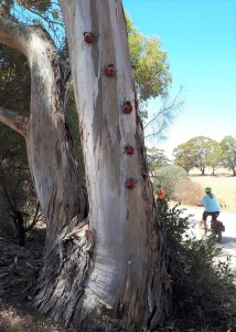 Lavender Cycling Trail (M2C) - Mount Pleasant to Murray Bridge -sculpture ladybirds – Photo by Kay Haarsma