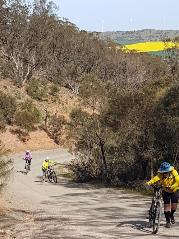 Lavender Cycling Trail (M2C) - Waterloo to Eudunda - Big Hills - West climb up Quinns Gap